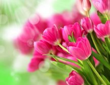 Pink bouquet tulips - Beautiful flowers