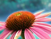 Beautiful macro pistil of a pink flower - HD wallpaper