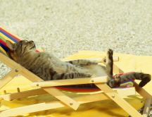 Gray cat sunbathing on sunbed