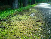 Green road in the forest - professional photo