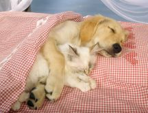 Cute cat and dog sleep embrace in the pink bed