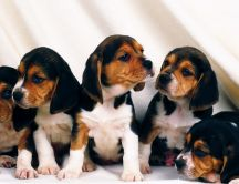 Sweet little puppies - Dogs wallpaper