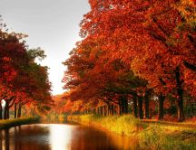Trees with red leaves on the shore of a river