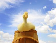 A cute yellow duck on a barrel