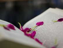 Pink petals in the middle of the book