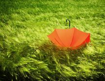 Red umbrella in the green grass on the field
