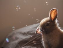 Cute brown bunny and many bubbles