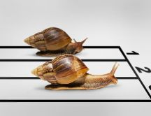 Snails race image - Funny wallpaper
