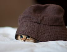 A sweet little kitty hiding in a burgundy hat