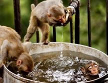 Three little monkeys at water - Cute animals