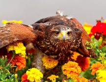 A brown bird over the many colorful flowers