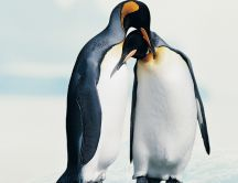 Penguins in love - Animal couple wallpaper
