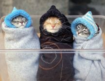 Three kittens with children hat - Funny wallpaper