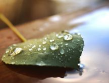 Water drops on a green leaf - HD wallpaper