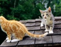 Gray and yellow kitties on the roof