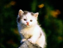 Very sweet white kitty on rock - Sad kitty