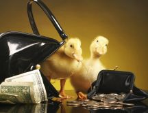 Ducks in the purse between money
