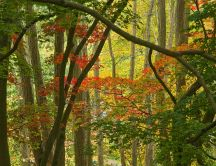 Few red leaves in forest - Autumn time