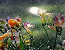 Rain over the colorful flowers from garden