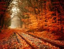 Train tracks through the woods filled with autumn leaves