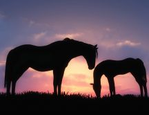 Two horses in grass in the purple sunset