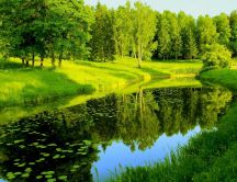 Wonderful green park - Landscape of nature