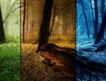 Spring autumn and winter in one wallpaper