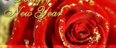 Red roses special for the New Year 2016