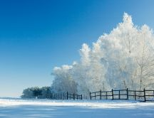 White frozen trees - HD cold winter wallpaper
