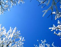 Beautiful blue winter sky - HD wallpaper
