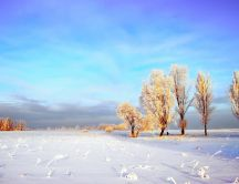 White winter field - HD sunny day