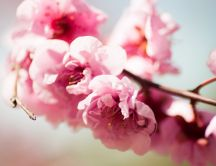 Wonderful spring moments - tree blossom - pink flowers