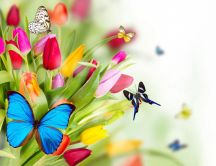 Colourful butterflies on the spring flowers-beautiful tulips
