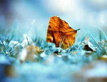 One leaf on the ground - HD wallpaper