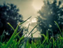 Macro green grass - nature landscape