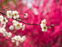 Blossom branch tree - HD spring season wallpaper