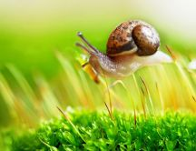 Little snail walk through the green grass of spring