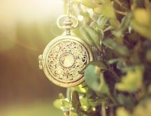 Old pocket watch in a tree - Macro HD wallpaper
