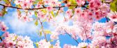 Pink flowers - Blossom tree - spring time