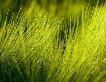 Beautiful green colour for the grass - HD wallpaper