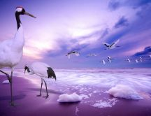 Birds with big legs at the seaside - wonderful HD wallpaper