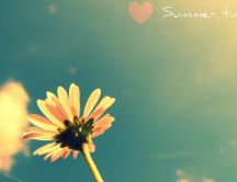 Love summer time - flower in the sun