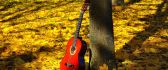 Guitar shining in the sun - beautiful golden leaves carpet