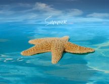 Big starfish in the blue ocean water - Hot summer time