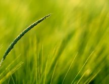 Macro blade of grass - beautiful green garden