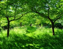 Path through grandparents orchard - wonderful green nature