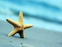 Starfish in the sand - water wonders