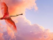 Pink Flamingo and wonderful red sky - HD wallpaper