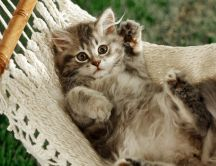Sweet little cat in a hammock - relaxing moments