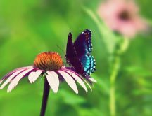 Wonderful butterfly on a flowers - summer wallpaper